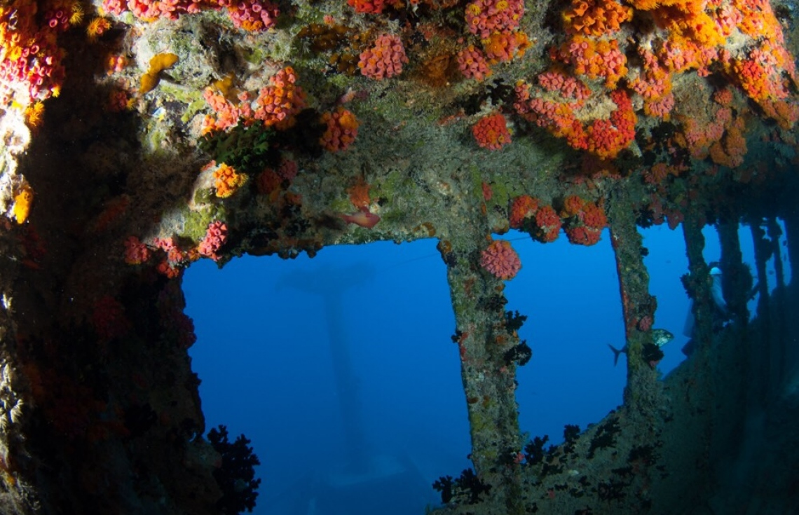 Diving for Shipwrecks: Maldives Victory