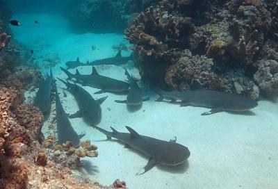 MORNING SHARK ADVENTURE